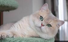 猫耵聍腺疾病包括增生、囊肿或肿瘤,猫耵聍腺病变可表现为单个或多个肿块