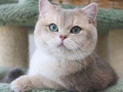 猫颈部屈曲病综合征,猫颈部屈曲病主要疗法