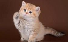 如何停止猫的慢性鼻分泌物?猫鼻子经常流鼻涕的原因有哪些?