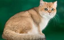 如何按摩猫的头和脖子?如何按摩猫的身体?按摩猫的技巧介绍