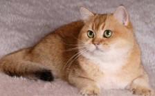如何控制流浪猫?如何减少流浪猫?
