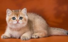 如何查明猫慢性鼻分泌物的原因?猫会患上流感,会感冒吗?