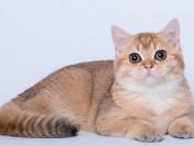 如何给猫咪按摩?如何让猫咪舒服?猫咪按摩技巧