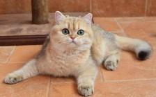 猫无形体病又称为埃利希体病、猫无形体病的诊断和疗法