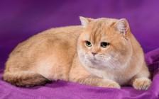 猫会贫血吗?引起猫贫血的原因,猫贫血应该怎么治疗?