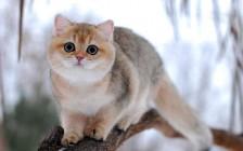 猫心率不齐症治疗注意事项,猫心率失常治疗,猫心律不齐的可能原因