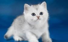 猫咬伤形成脓肿的三个阶段,猫被咬伤的早期症状及疗法
