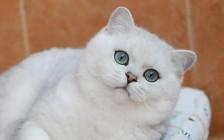 猫支气管炎博德特氏菌感染的主要疗法,强力霉素为首选治疗药物