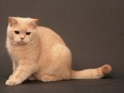 如何了解猫?注意猫的肢体语言,接受猫的好奇心