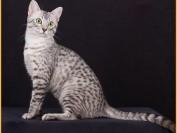 如何给猫喝药?猫咪服用液体药物的简单技巧