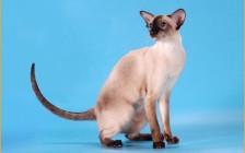 早期猫痤疮的主要特点,猫痤疮诊断,猫痤疮主要疗法