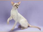 如何给猫治疗Tape虫?吡喹酮药物对猫Tape虫的治疗作用