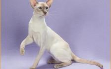 猫放线菌病偶见于猫,猫放线菌病的各种表现。