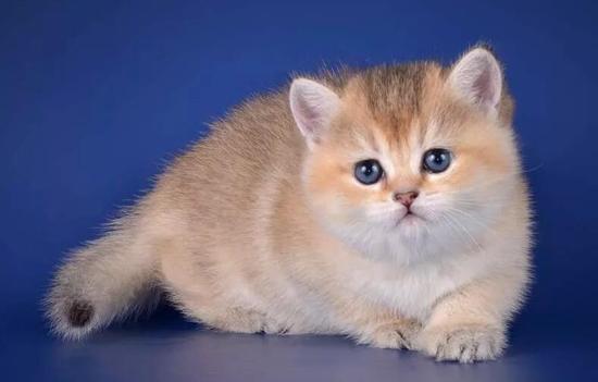 养猫时如何养其他宠物?如何向您的猫介绍新宠物?猫和其他宠物的关系培养