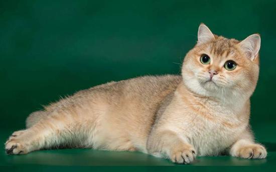 """如何用俄语说猫?如果要用俄语正确说出""""猫""""一词?"""