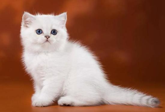 猫被狗咬伤时伤口愈合的四个阶段,猫被犬咬伤如何治疗?
