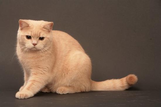 如何清除混凝土上的猫渍?如何清洁尿尿的猫衣服?
