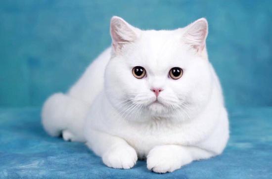 如何给猫进行打针肌肉注射?打针注意事项有哪些?