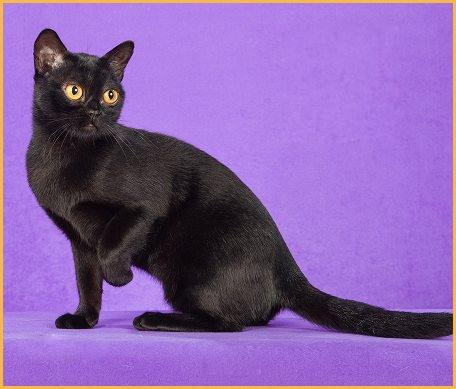 猫癌和猫腺癌的临床症状,猫癌或猫腺癌的鉴别诊断