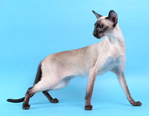 如何预防蛇咬猫?怎么知道猫是否被蛇咬过?猫对蛇毒有抵抗力吗?